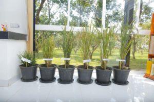 Agri Produce | CIC Holdings