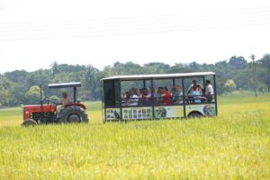 5 - Farms (12)-2