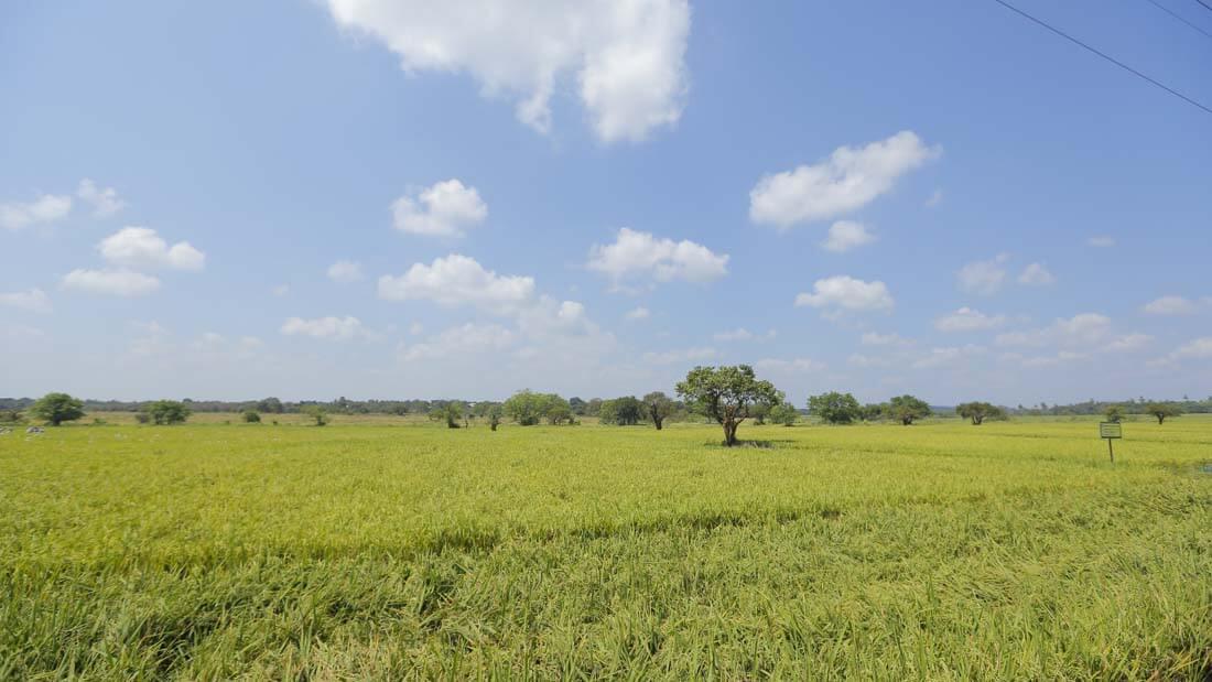 5 - Farms (3)